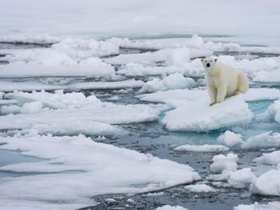 اقیانوس منجمد شمالی بدون یخ میشود