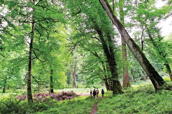 دفن جنگلهای شمال زیر زبالههای نوروزی