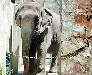 فیل افسرده باغوحش آزاد شد