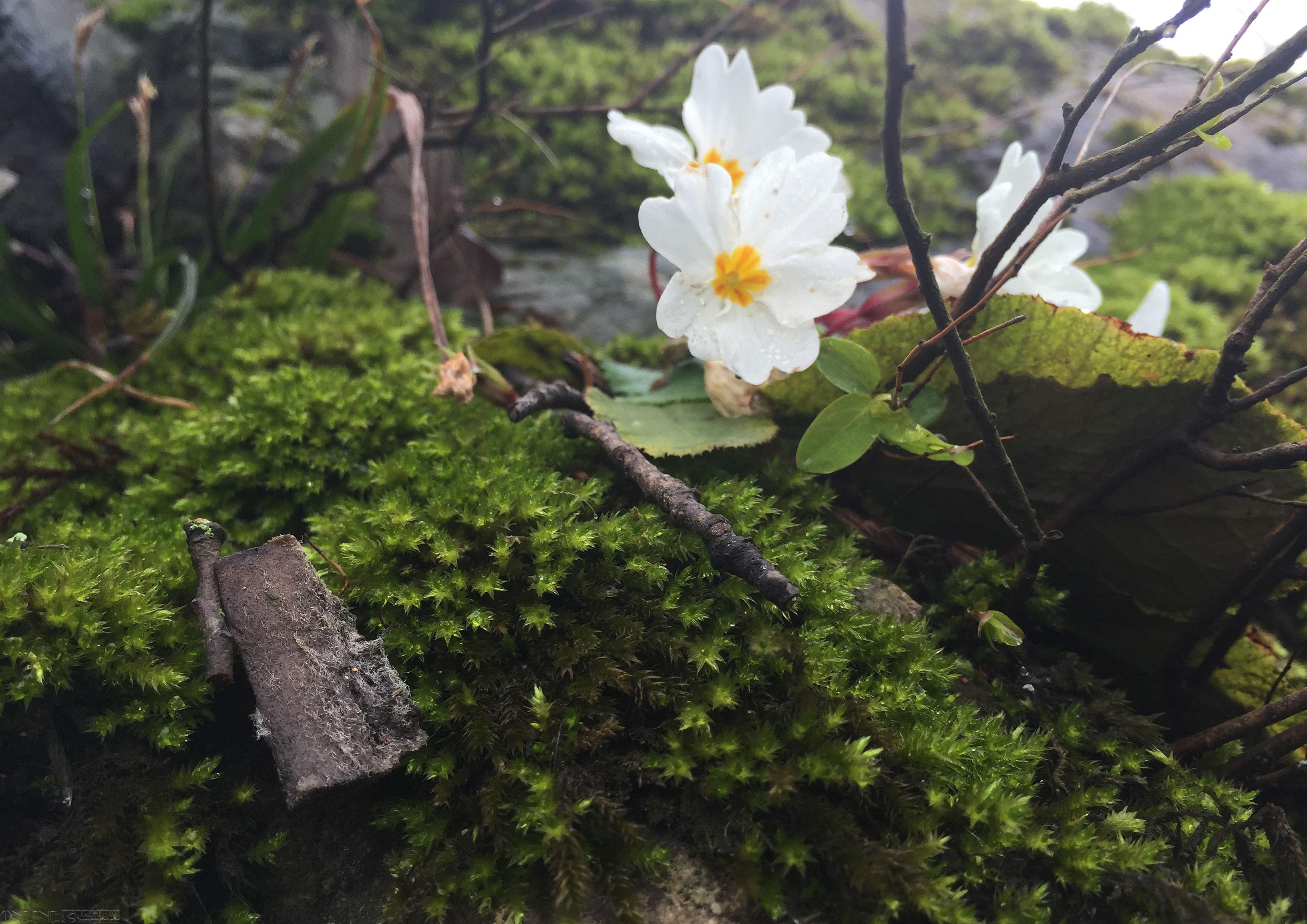 بهار | گل - عکس: رضا یغمایی