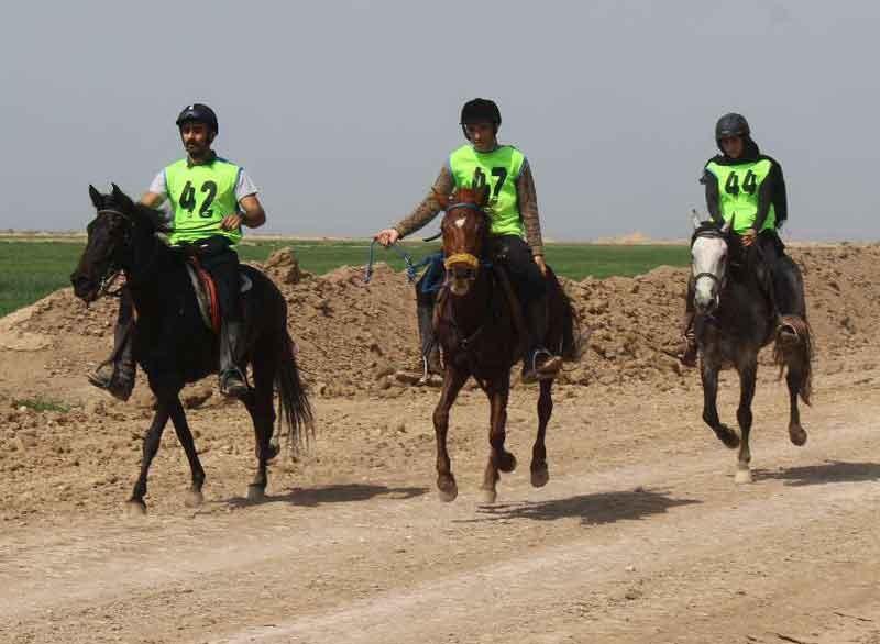 مسابقات قهرمان کشوری سوارکاری استقامت به میزبانی خوزستان برگزار شد