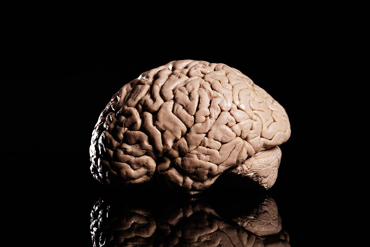 جایزه یک میلیون یورویی برای سیستم پاداش در مغز