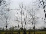 عکس | شاخهها؛ یادها، پرندهها