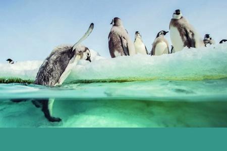 پنگوئنها باز میگردند
