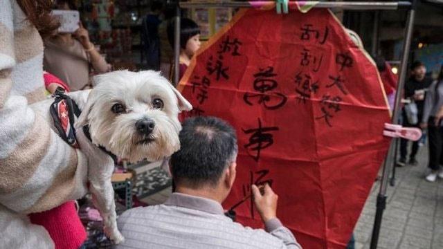 اقدام جدید تایوان برای تبدیل شدن به یک کشور دوستدار حیوانات