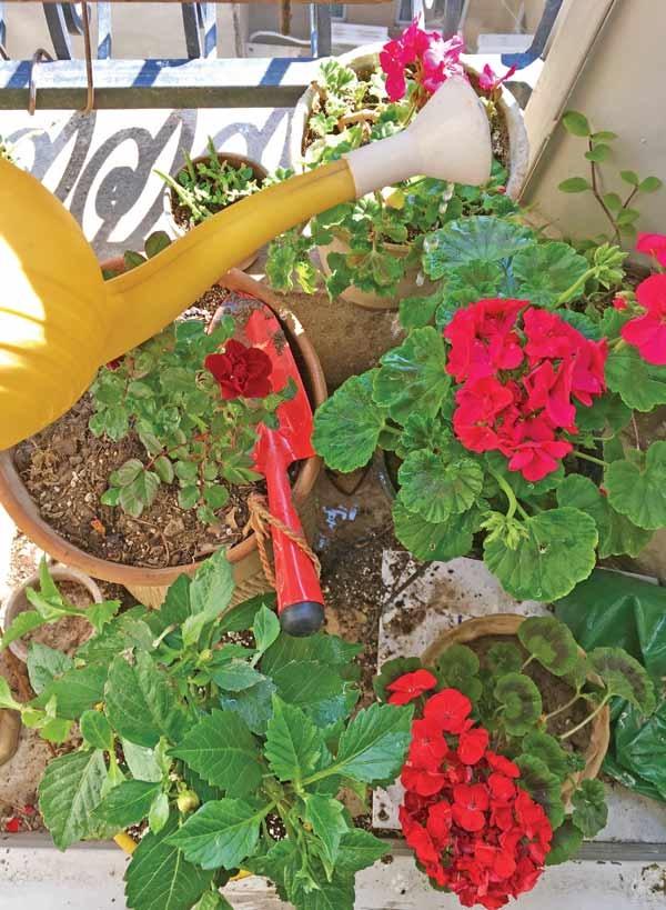 نذر گلدان و آرزو