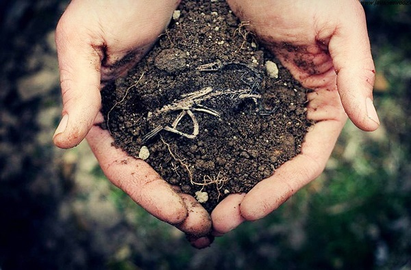 آلودگی خاک