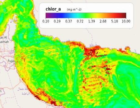 موج تازه پدیده کشند قرمز در سواحل امارات