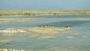 مجلس وزارت نیرو را مکلف به تأمین آب تالابها کرد