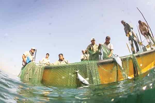 هجوم ساخت وسازهای لجامگسیخته ساحلی به خلیجفارس