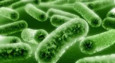 میکروبهای روده عامل بروز سندروم خستگی مزمن