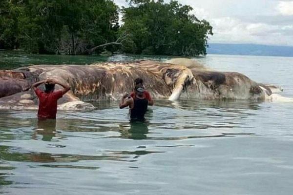 کشف لاشه ۱۵ متری آبزی اسرارآمیز در سواحل اندونزی