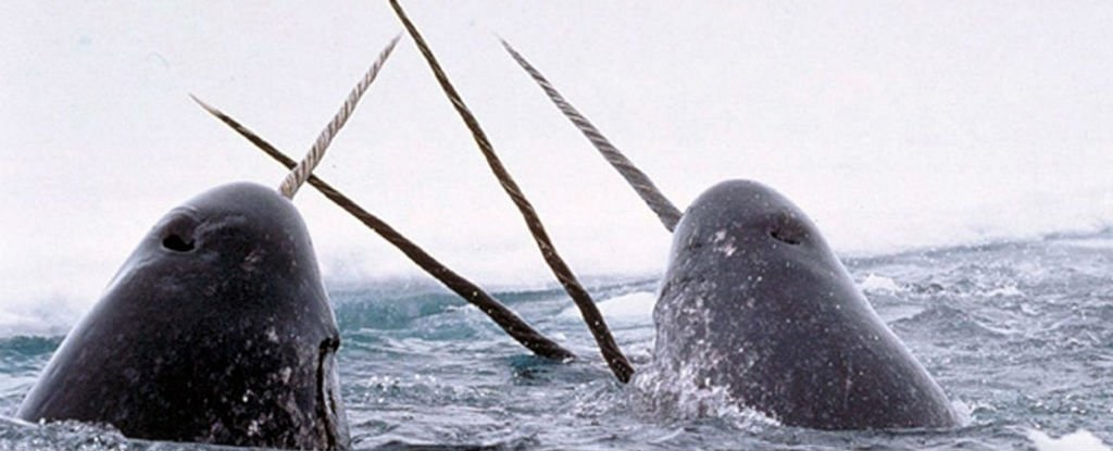 کاربرد شاخ تکشاخهای قطبی چیست؟