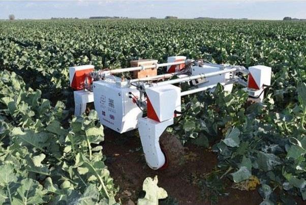 روباتی که سبزی و میوه میچیند