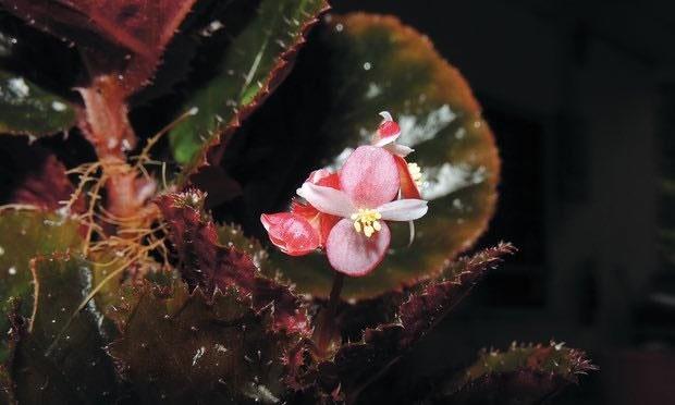 کشف ۱۷۰۰ گونه جدید گیاهی در سال ۲۰۱۶