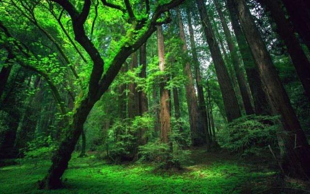 درختکاری به تنهایی برای کاهش گازهای گلخانهای کافی نیست