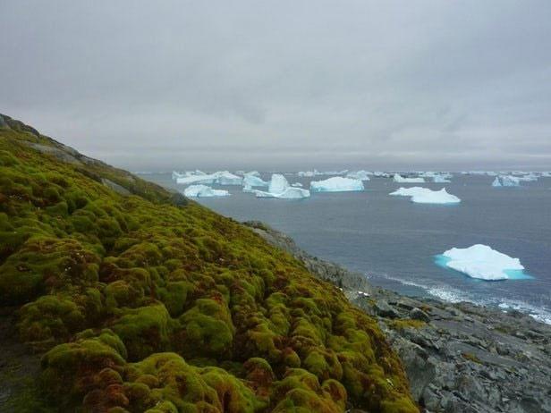 تغییر اقلیم قطب جنوب را سبز میکند!