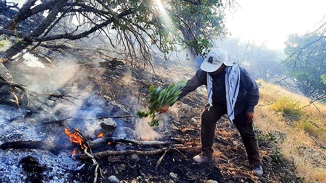 آتشسوزی جنگل