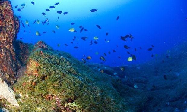 مهاجرت اجباری گونههای آبزیان در پی گرم شدن اقیانوسها