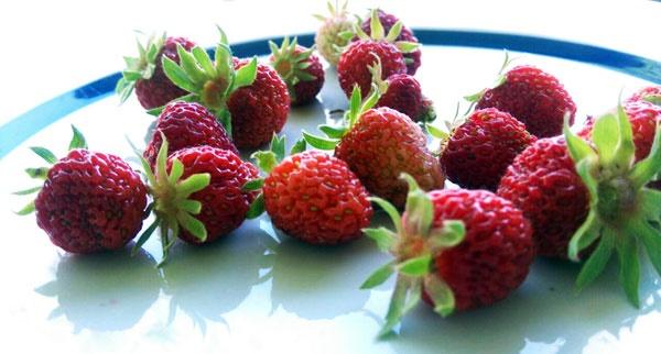 غذای ارگانیک، سالم یا طبیعی