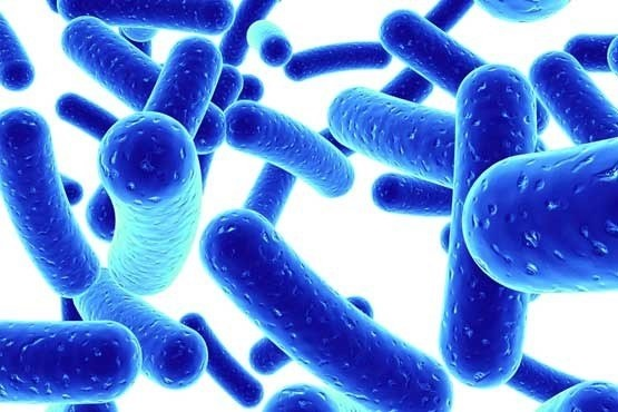 آنتی بیوتیک با مخمر نان