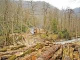 توقف ۸۰درصد طرحهای بهرهبرداری از جنگلهای شمال