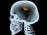 نحوه فرماندهی مغز برای تنظیم اشتها