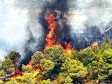 درخواست بالگرد از وزارت دفاع برای مهار آتشدر طبیعت