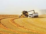 خرید گندم از مرز ۲.۱ میلیون تن گذشت