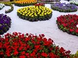قدرت شگفت آور عطر گلها بر سلامت افراد