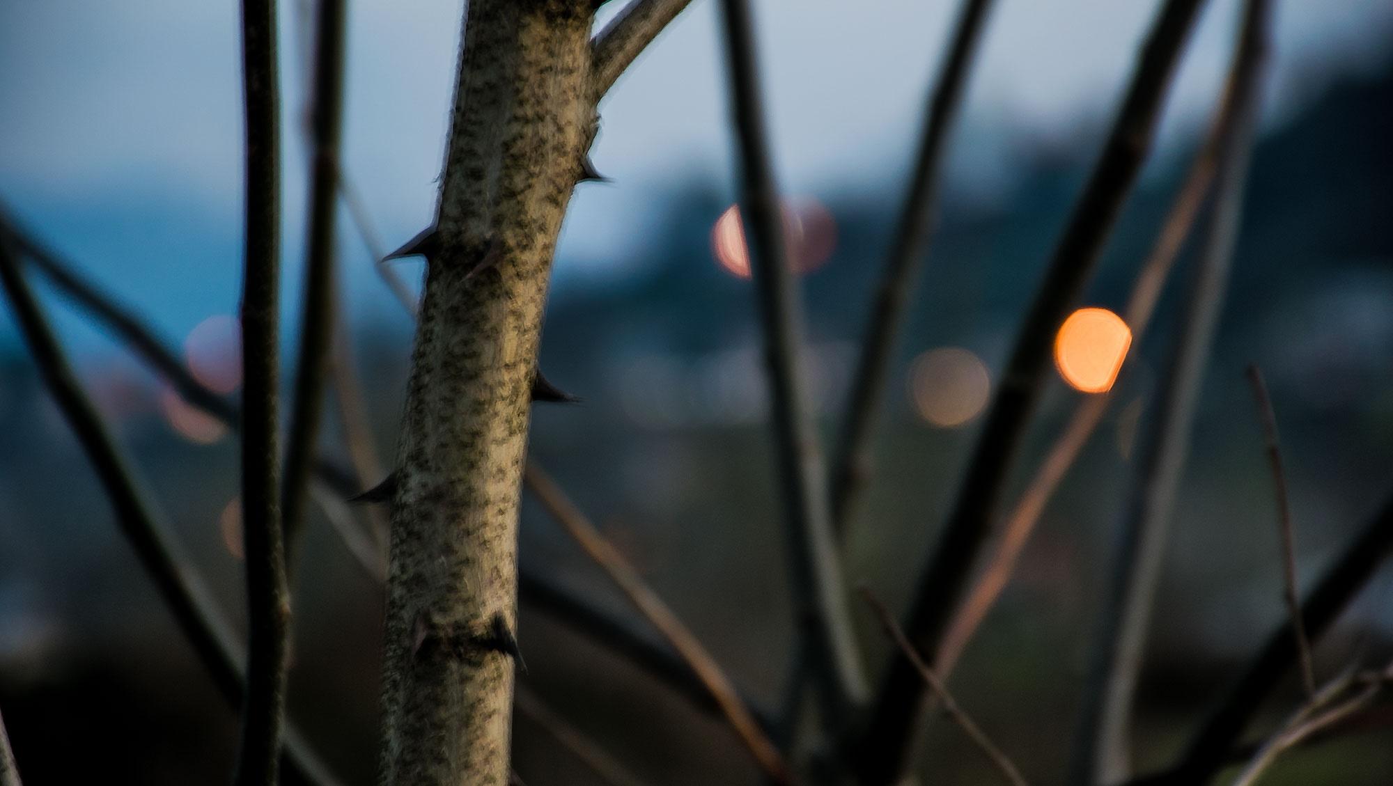 تصویر | چراغ دلت همواره روشن