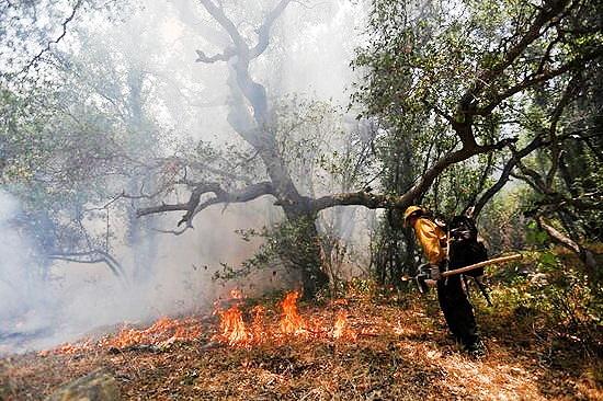 علت ۹۵ درصد آتشسوزیهای جنگلها «انسانی» است