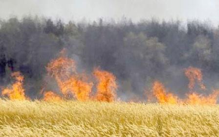 ۱۲۵ هکتار از گندمزارهای گلستان سوخت