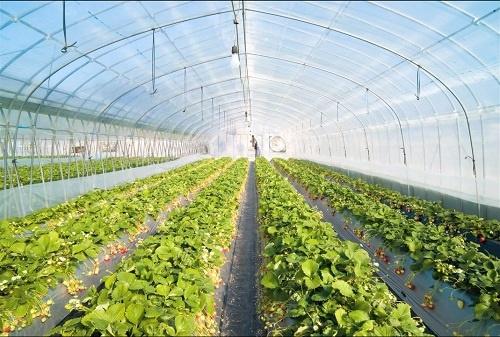 برنامه پنجساله توسعه سیستمهای هوشمند گلخانهها در ایران اجرا میشود