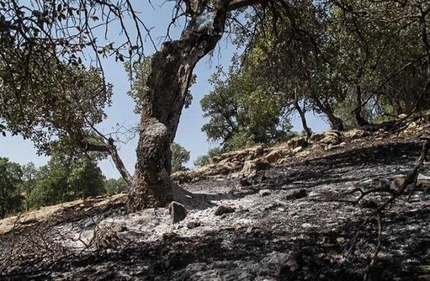 سطح حریق جنگلی در ایران پایینتر از میانگین جهانی است