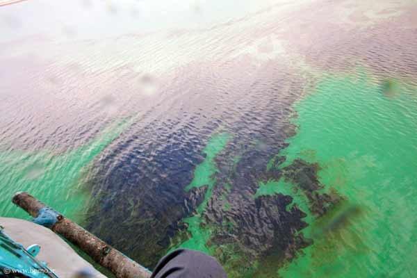 خطر غرقشدگی سواحل خزر با نفت