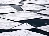 بحران آلودگی پلاستیکی در قطب جنوب