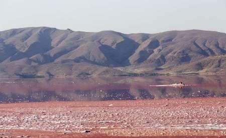 افزایش کشندهای سرخ در دریاچه مهارلوی شیراز