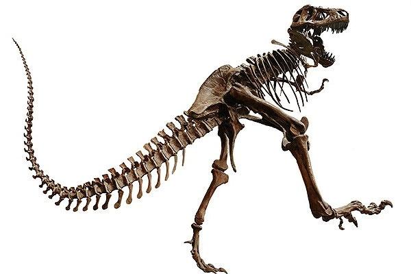 کشف بقایای دایناسور دوپا در ارتفاعات البرز ایران