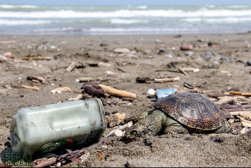 تولید روزانه ۱۳ هزار تن پسماند در هفت استان ساحلی کشور