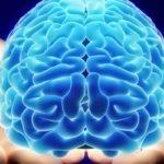 تفاوت مغز زنان باردار با زنانی که هرگز مادر نمیشوند