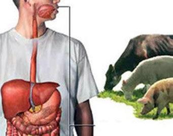 بیماری های مشترک انسان و حیوان