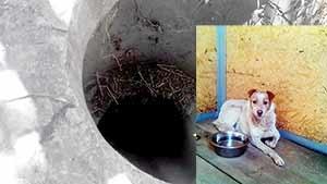 سگی که ۳سال در چاه زنده ماند