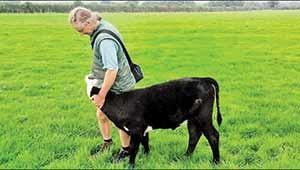صلح در مزرعه حیوانات