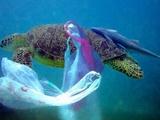 مسابقه نوآوری برای مبارزه با ریختن پسماند پلاستیکی در دریاها