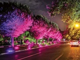 روشنایی بیش از اندازه؛ آلاینده زیبای شهرها