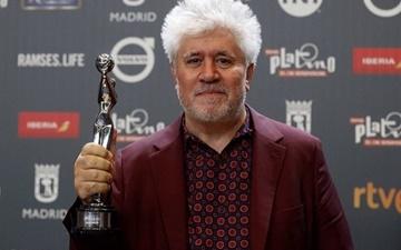 جایزه پلاتینو برای پدرو آلمودوار |  نرودا دست خالی ماند
