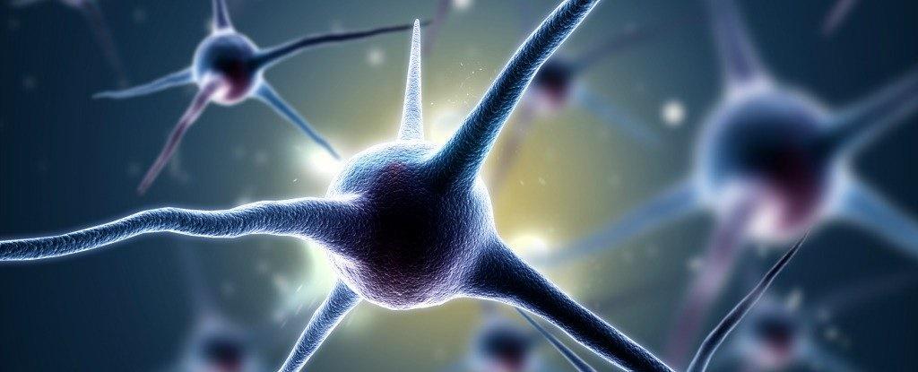 احیای خاطرات از دست رفته در موشهای آلزایمری