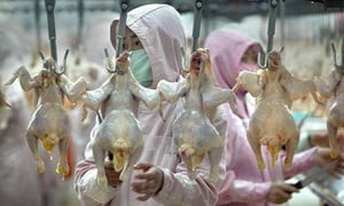 خطرات مصرف آنتیبیوتیکها در صنعت مرغداریِ آسیا