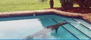 اشتباه گرفتن تمساح با اسباببازی